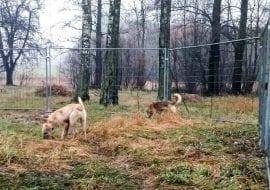 akcja charytatywna psu na budę warszawa ogrodzenia tymczasowe tlc rental. 2 www