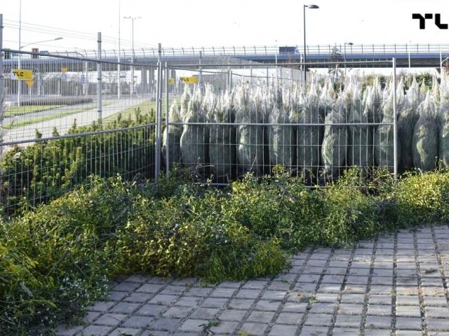 ogrodzenia-azurowe-wynajem-mobilt-choinki-www-18