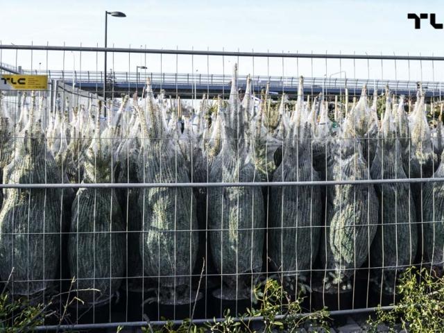 ogrodzenia-azurowe-wynajem-mobilt-choinki-www-21